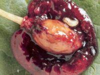 n20Kirschfruchtfliege3