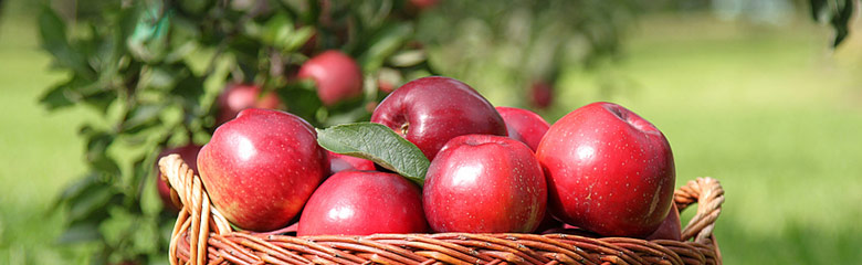 Knackige Äpfel in einem Korb