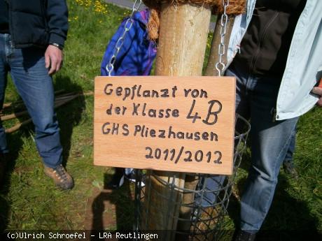 Pflanzschild Klasse 4B an Baum